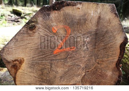 A sawn log with the number two spray painted onto it