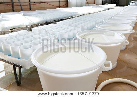 Milk For Production Of Soft Cheese