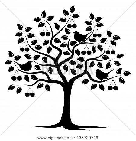 vector cherry tree and birds isolated on white background