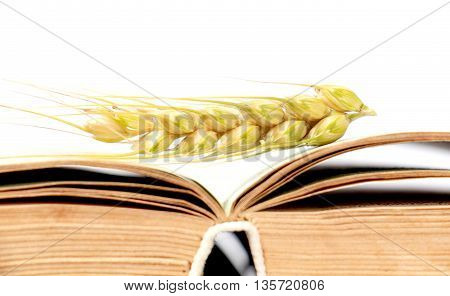 picture of a wheat ears laying on an old book pages