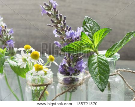 mint, lavender and chamomile