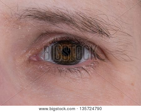 Close up of a brown human eye