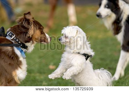 two dogs who meet in a park