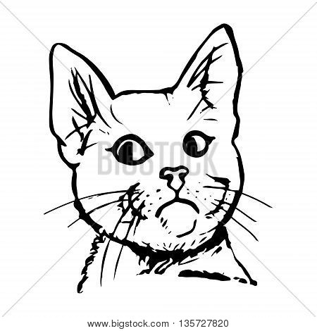 Graphic image of a head of a cat. The cat looks away abstract illustration on white background. Vector picture
