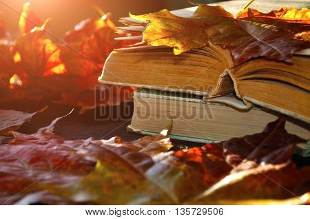 Autumn still life -old books among the autumn leaves lit by  bright sunlight. Focus at the book's spine.