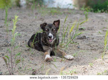 Portrait of adorable stray puppy having rest on a riverside