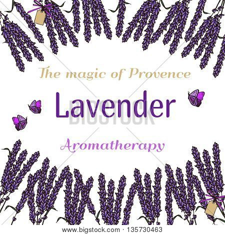 Vintage hand drawn lavender background. Engraving illustration. Vector illustration. Lavender herbal bouquets and label in vintage style