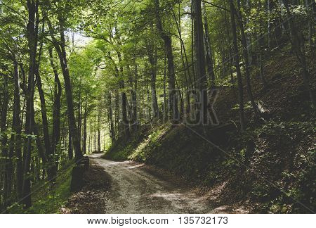 A pathway through dense woodland forest in Romania.