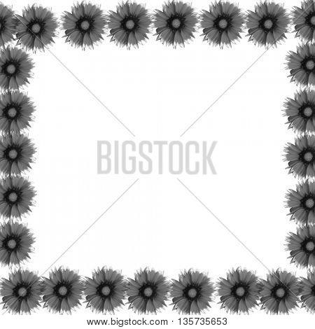black flowers on white