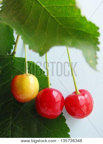 3 beautiful cherries