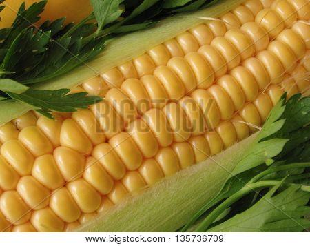 close up of fresh corn