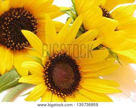 few sunflowers