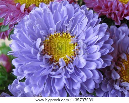 Closeup of beautiful fresh flower
