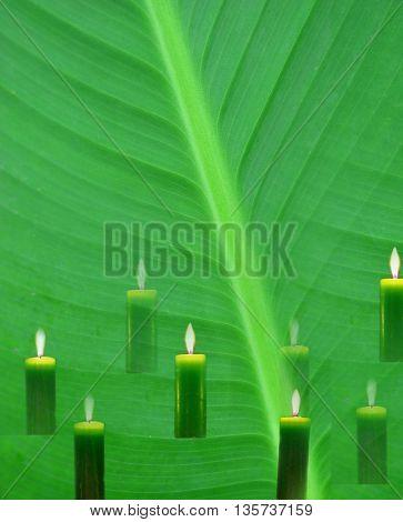 green lamina and green candles