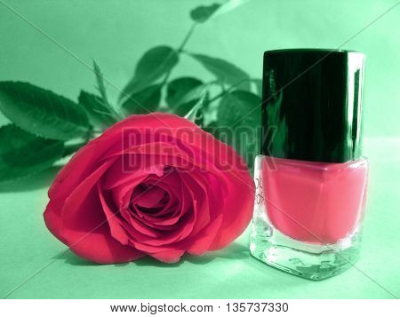 Pink rose and pink nail polish