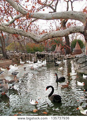 Beautiful oases
