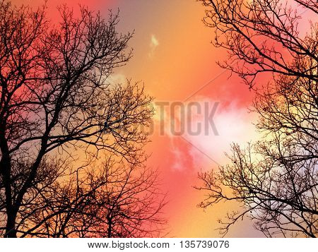 Leafless branches in sunset
