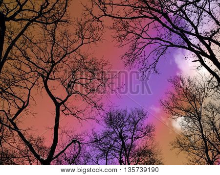 Leafless branches under beautiful rainbow sunset