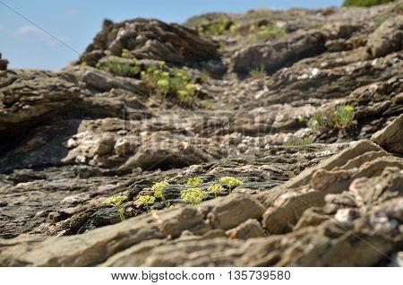 Rocks of Mediterranean coast with rare green plants