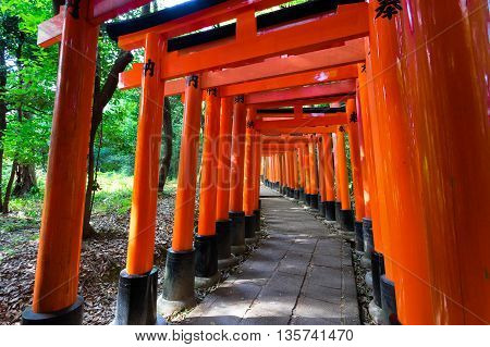 Bright Red Torii In Shinto Shrine, Kyoto