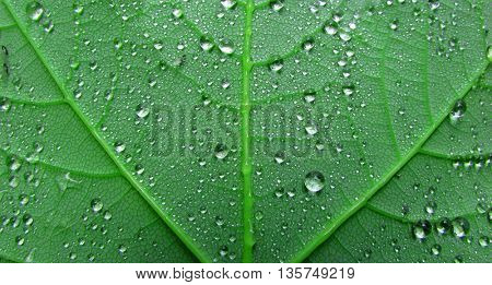 close up of wet leaf