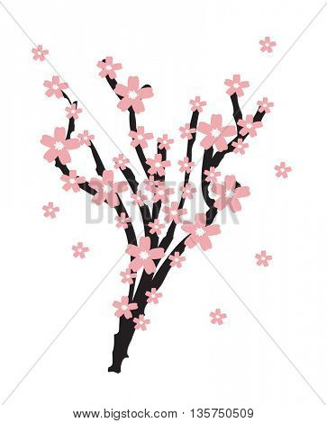 Realistic sakura blossom - Japanese cherry tree isolated on white background