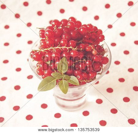 fresh ripe currant