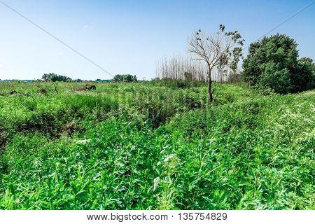 Green Meadow In Summertime