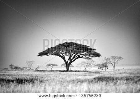 Beautiful landscape with trees in african natural park
