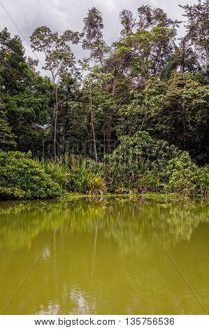 Amazonian Jungle Cuyabeno Wildlife Reserve South America