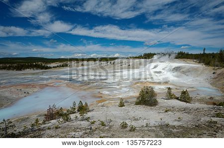 Thermal area at Norris Geyser Basin, Yellowstone, Wyoming, USA