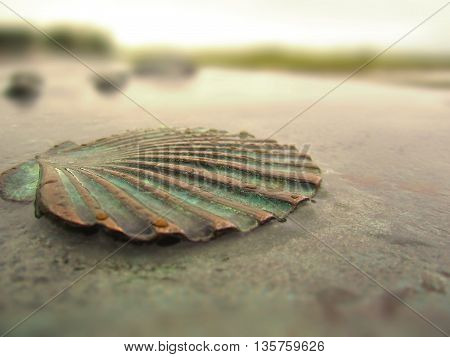 An old copper seashell in rainy day.