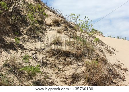 Sand Dunes at Ludington State Park in Michigan