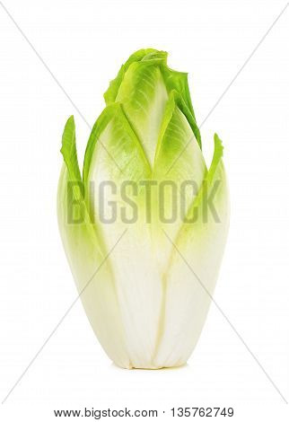 Fresh Chicory Isolated