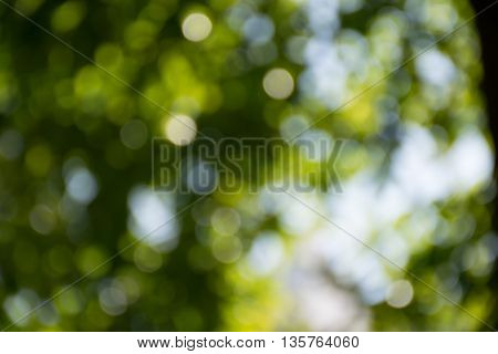 Bokeh Of Nature Texture