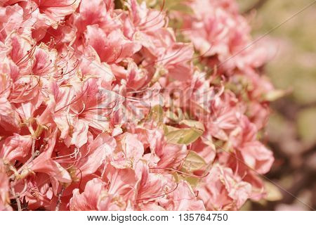 Light pink flower bouquet in soft tone