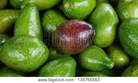Ripe red avocado in bunch of green Avocados. Stack of delicious fruits.