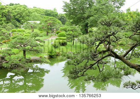 Pine Trees, Footpath, Grasses And River In Zen Garden.pine Trees, Footpath, Grasses And River In The