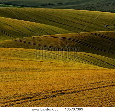 Evening over fields with ripen grain in a Small Tuscany on the South Moravia in the Czech republic.