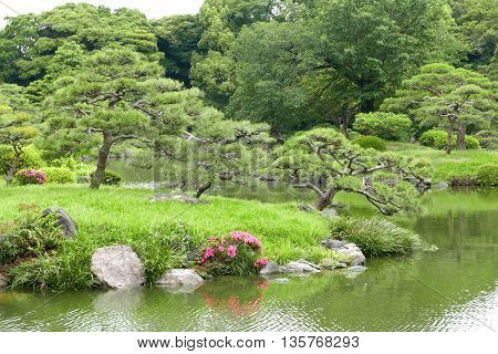 Pine Trees, Grasses And River In The Japanese Zen Garden.
