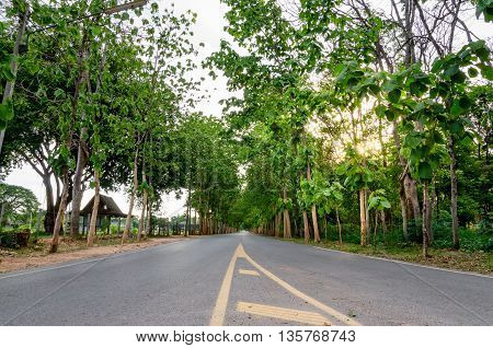 Tall Teak beside both side of lonely road
