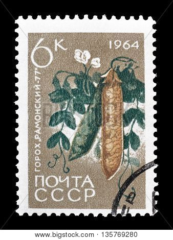 SOVIET UNION - CIRCA 1964 : Cancelled postage stamp printed by USSR, that shows beans.