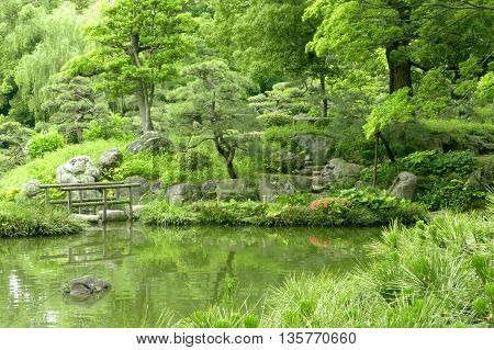 Pine Trees, Bridge With Reflection In Japanese Zen Garden
