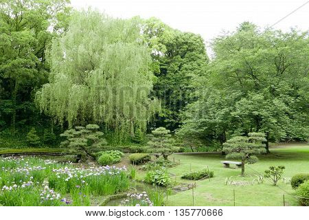 Green Trees, Bridge, Flowers In Japanese Park