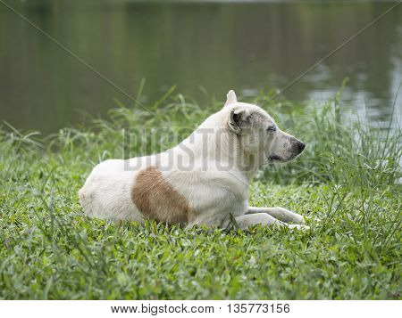 The dog sitting in grass and see the river