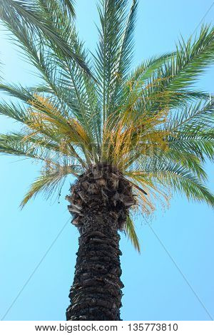 under palm against the blue sky photo