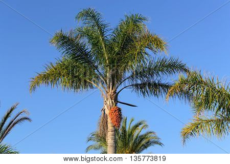 summer palm tree blue sky vacation horizontal photo