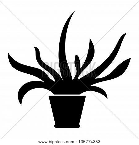 Flower in the pot ( shade picture )
