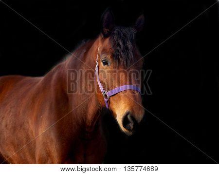 Photo of beautiful brown horse in dark