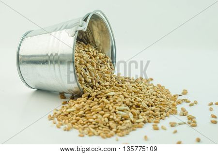 Wheat in a bucket on a white background